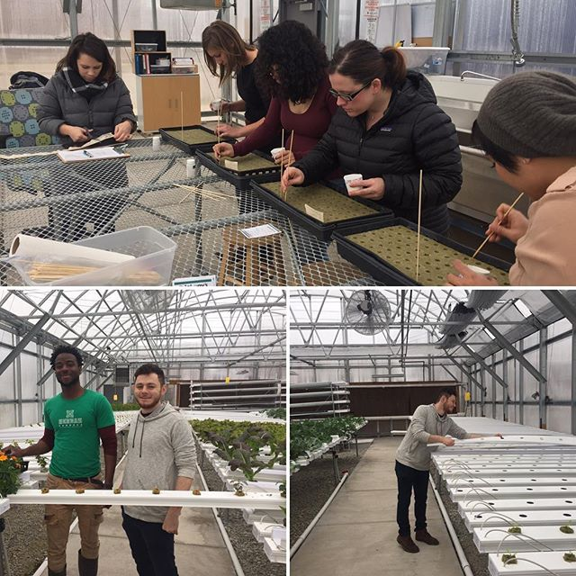 Thanks to @bokarestaurantgroup for all their help! Boka Rocks! ✌️ #herbanproduce #volunteer #hydroponics #urbanfarm #greenhouse