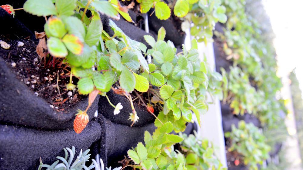 Brandon Pruett, Living Green Design, Anchor Brewing Company, Florafelt System
