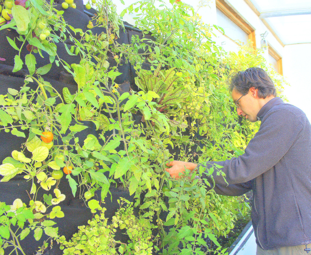 Aquaponic Vertical Vegetable Garden Florafelt Vertical