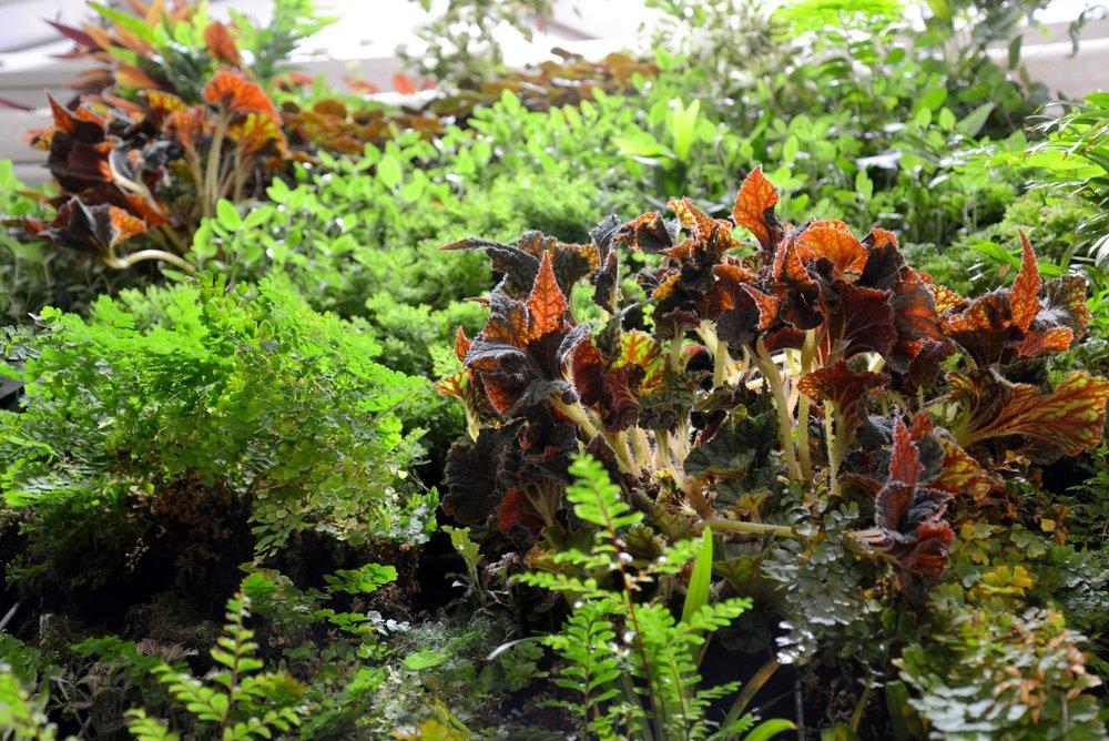 Brandon Pruett, Living Green Design Showroom, San Francisco. Florafelt Pro System.