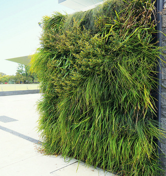 Glen-Iris-Cricket-Club-by-Fytogreen-Florafelt-Vertical-Garden-System-1.jpg