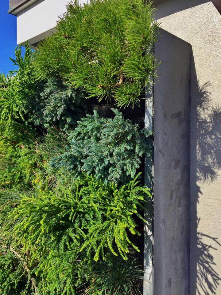 Linsey-Graves-Living-Green-Design-Florafelt-Pro-Vertical-Garden-2.jpg