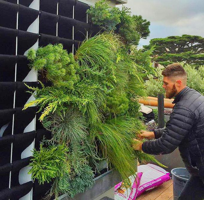 Linsey-Graves-Living-Green-Design-Florafelt-Pro-Vertical-Garden-4.jpg