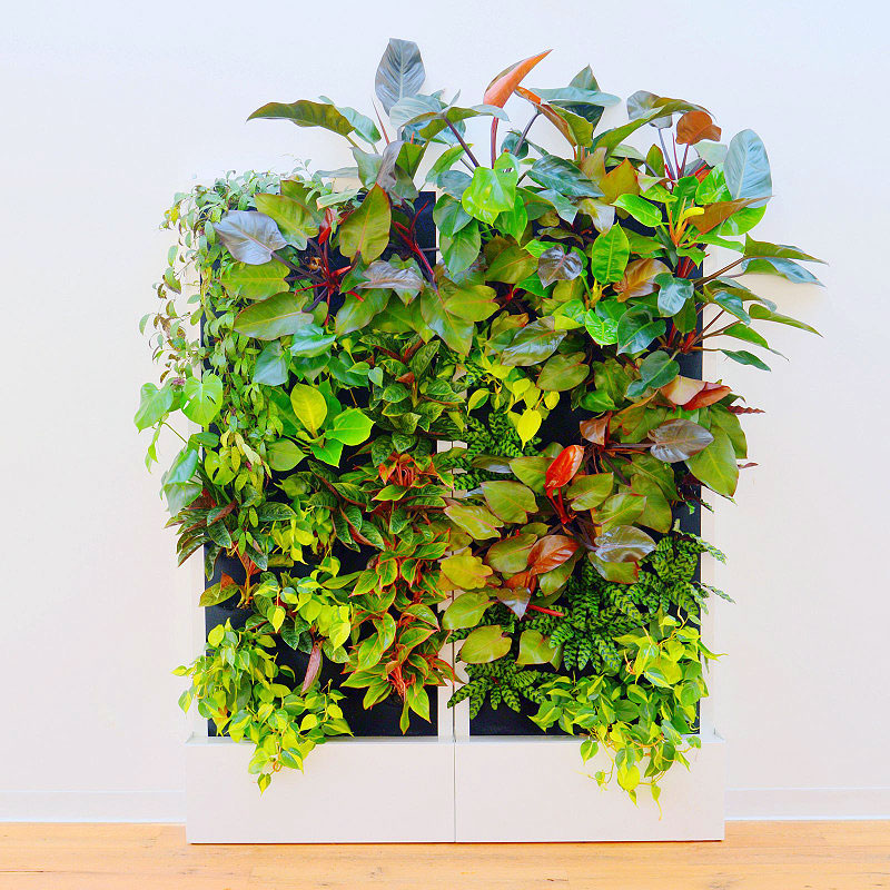 2 Florafelt Recirc 33-Pocket Wall Units  by Chris Bribach of Plants On Walls