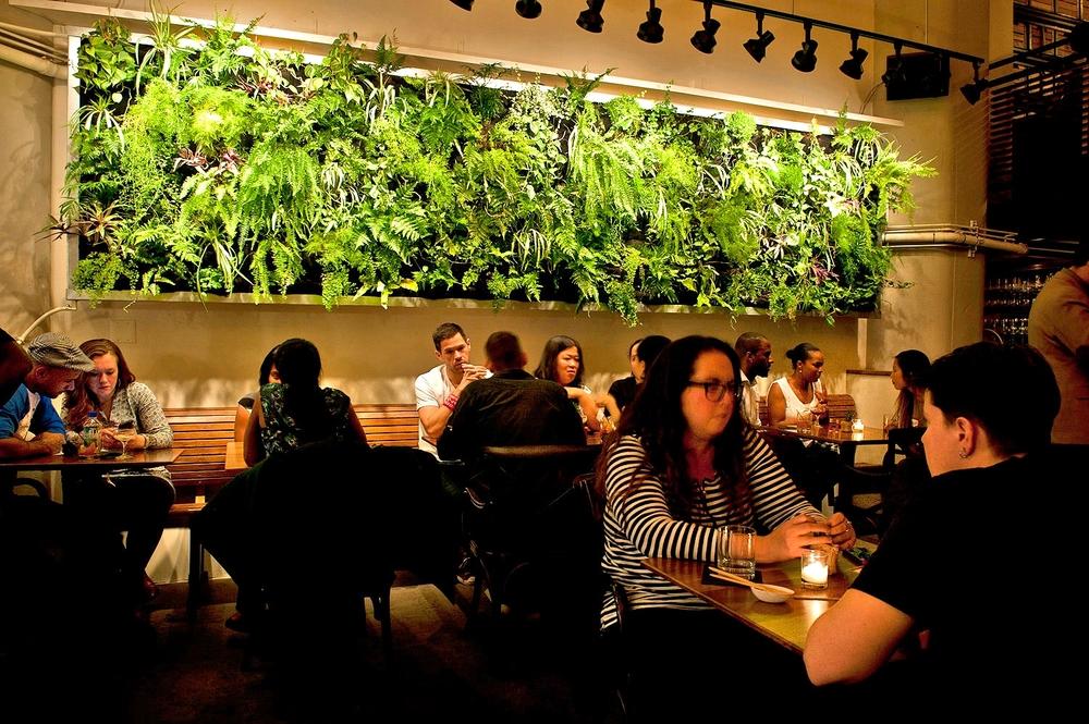The big reveal.FireDean Schilling,The Brooklyn Garden Club,Atrium DUMBO. Florafelt vertical garden.