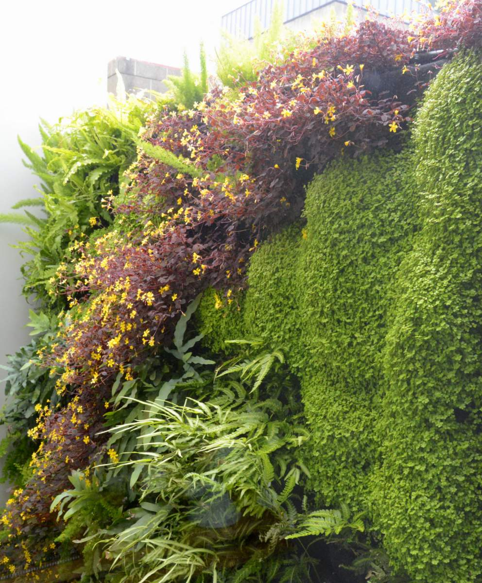 Design by Tim O'Shea, Rock & Rose, Plants On Walls. Florafelt Pro System Vertical Garden.