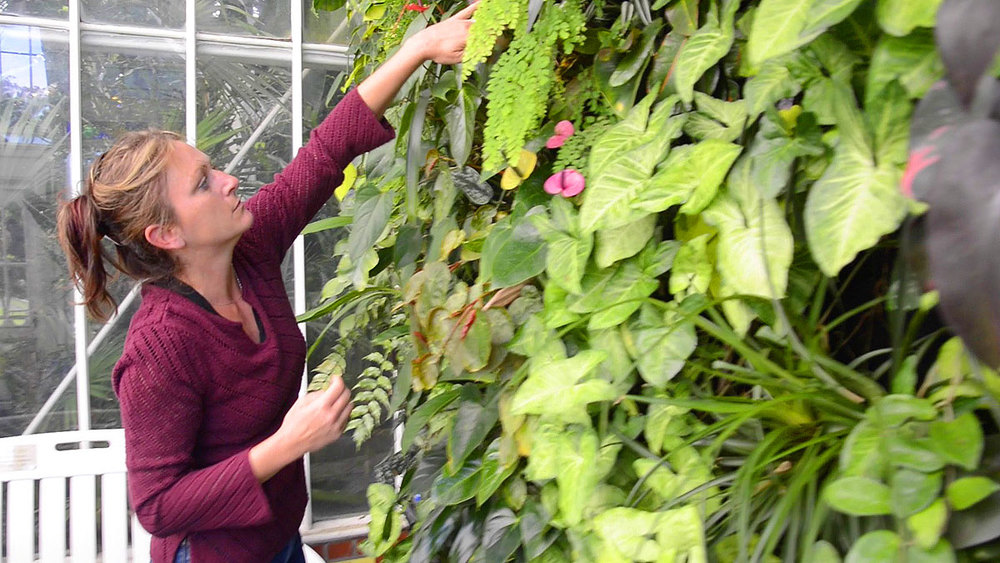 Volunteer Horticulturist, Steph Kantorski. Conservatory of Flowers. Florafelt Vertical Garden System.