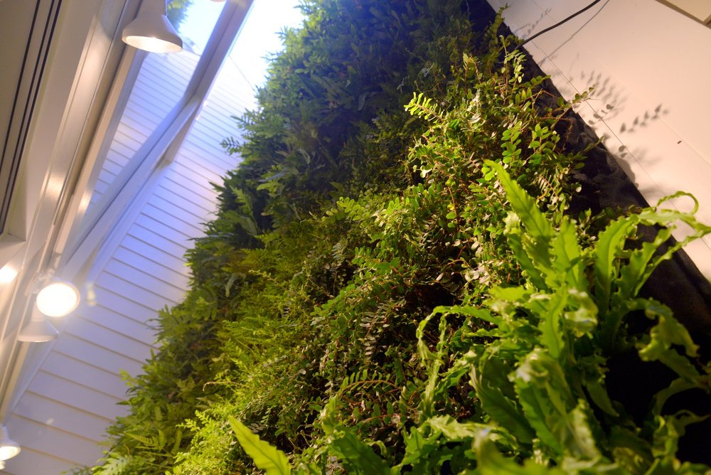 Florafelt-Vertical-Garden-Living-Wall-Belevedere-Street-09-_CJB3514.JPG