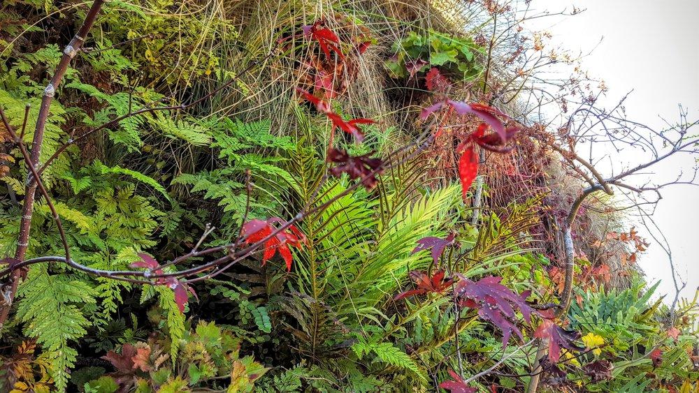 Florafelt-Pro-System-Vertical-Garden-Brandon-Pruett-Living-Walls-Living-Green-Design-20161108_092929.jpg