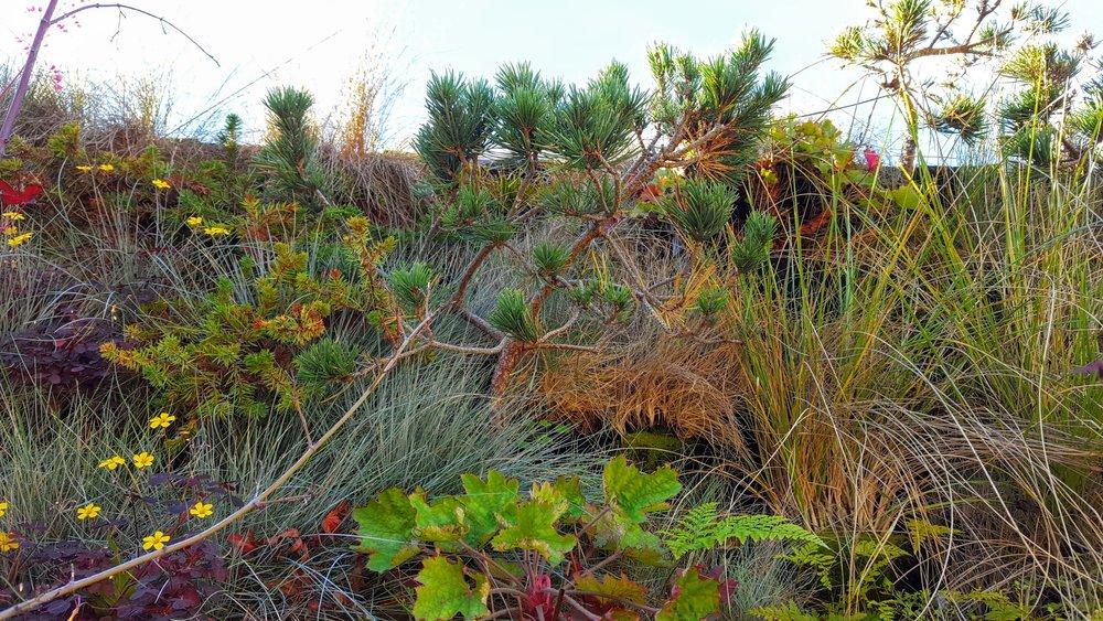 Florafelt-Pro-System-Vertical-Garden-Brandon-Pruett-Living-Walls-Living-Green-Design-20161108_093015.jpg