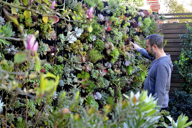 Florafelt Pro System living wall by Alec Hawley Landscape Architect San Francisco.