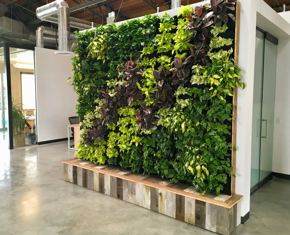 Florafelt Vertical Garden for Yoobi Los Angeles by Tucker Warner Design Build