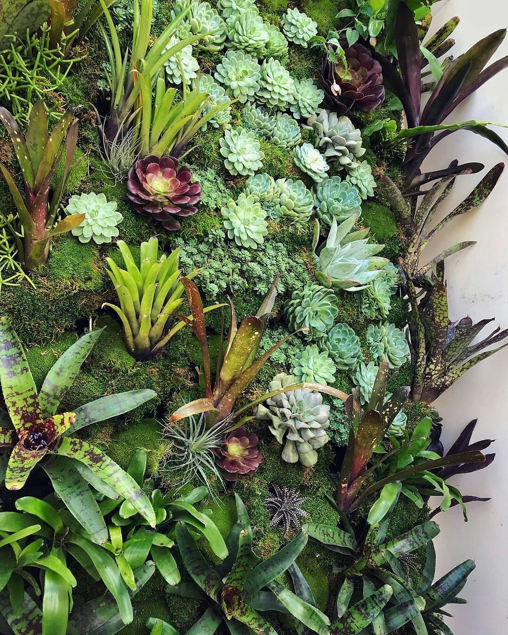 Florafelt Pro System for a Pacific Heights Home by Lindsey Graves of Living Green Design San Francisco.