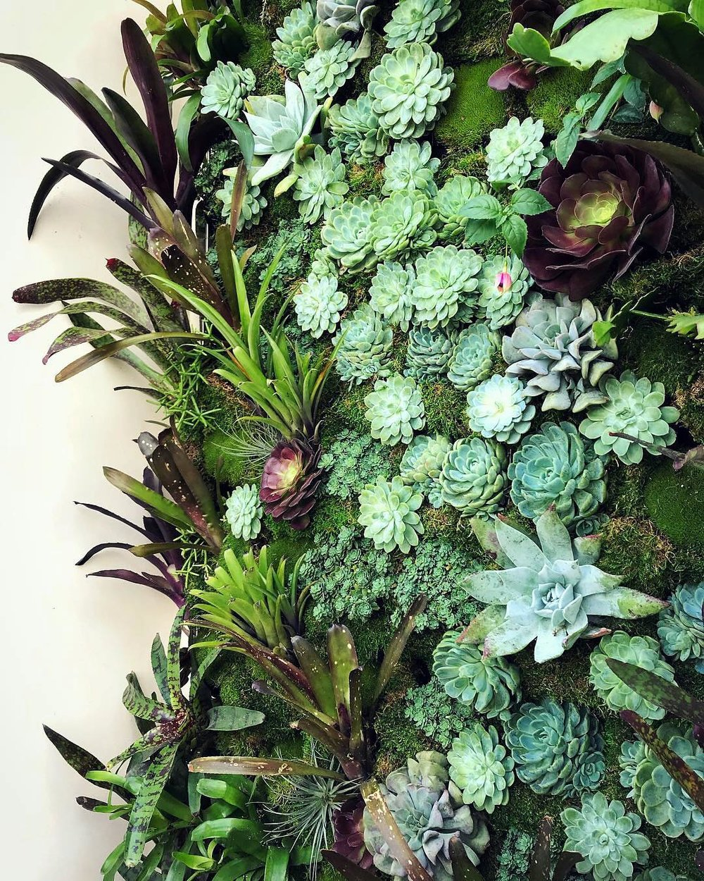 Florafelt Pro System for a Pacific Heights Home by Lindsey Graves of Living Green Design San Francisco