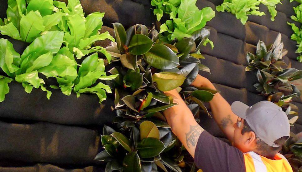 Florafelt-Vertical-Garden-installation-001.jpg