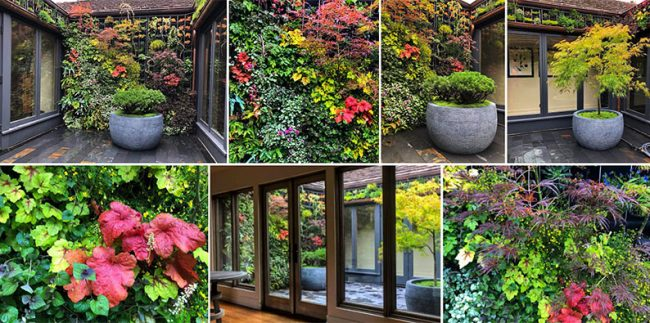 Carmel California Courtyard Living Wall by Living Wall by Living Green Design.