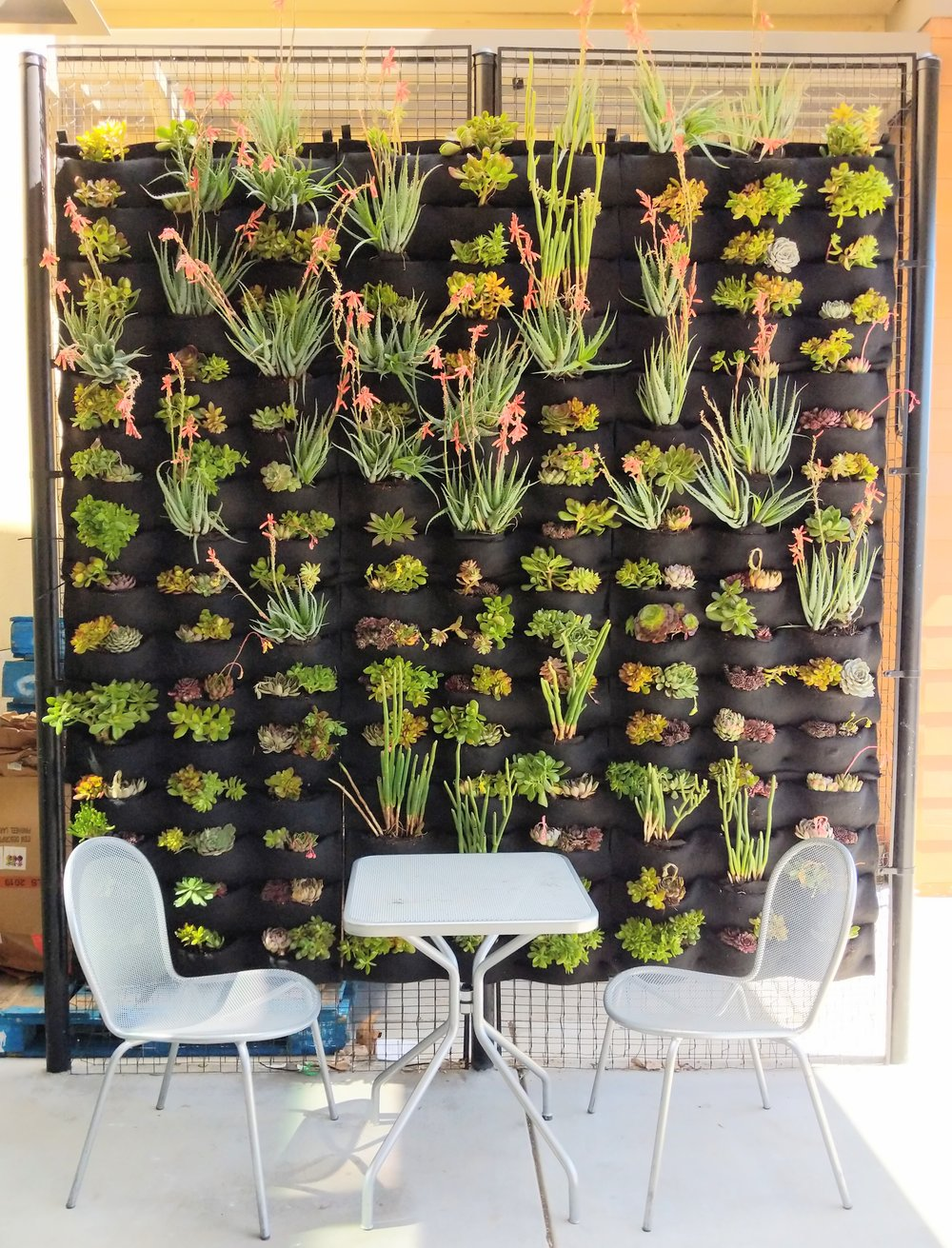 Florafelt Pocket Panel living wall filled with Succulents for Jamba Juice in Martinez, California.
