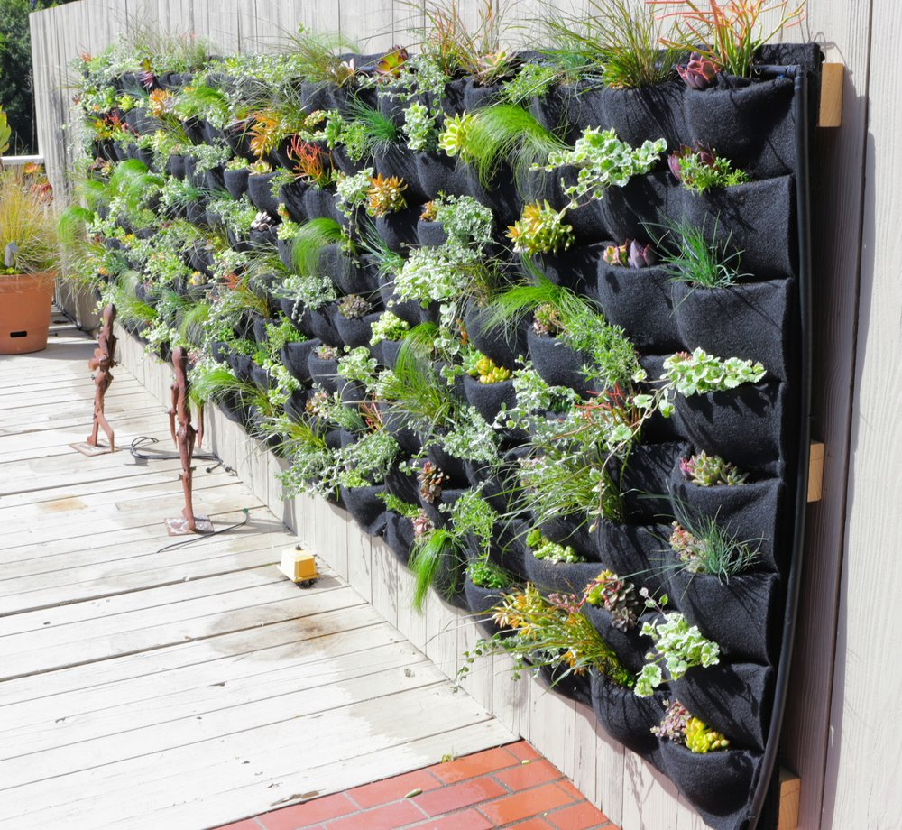 Planted Places features a mix of grasses and succulents for this Florafelt Pocket Panel living wall.