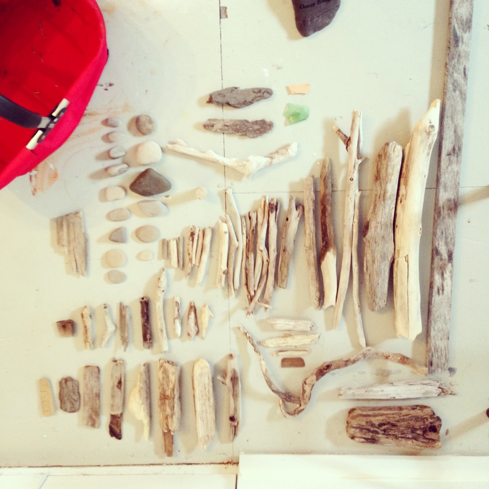 Dog walkdriftwood finds