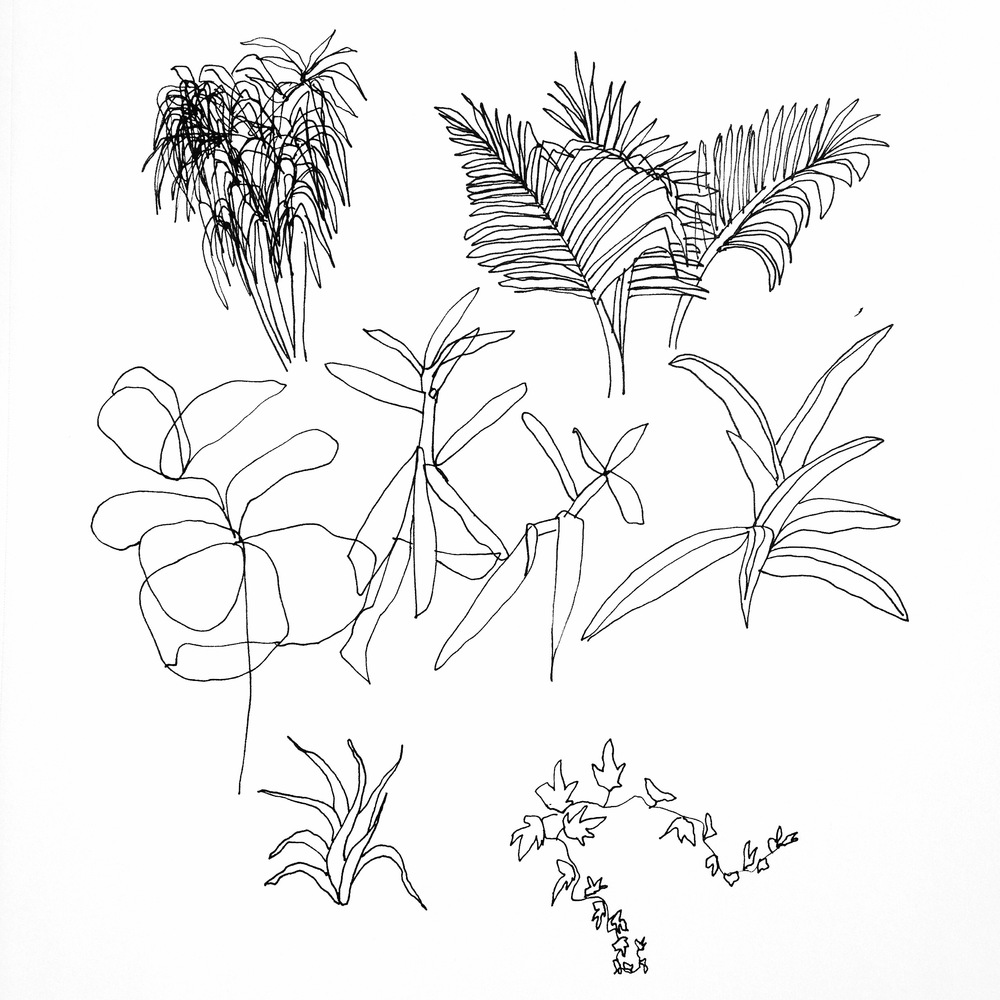 "Botanicals, pen on paper, 11"" x 14,"" $55"