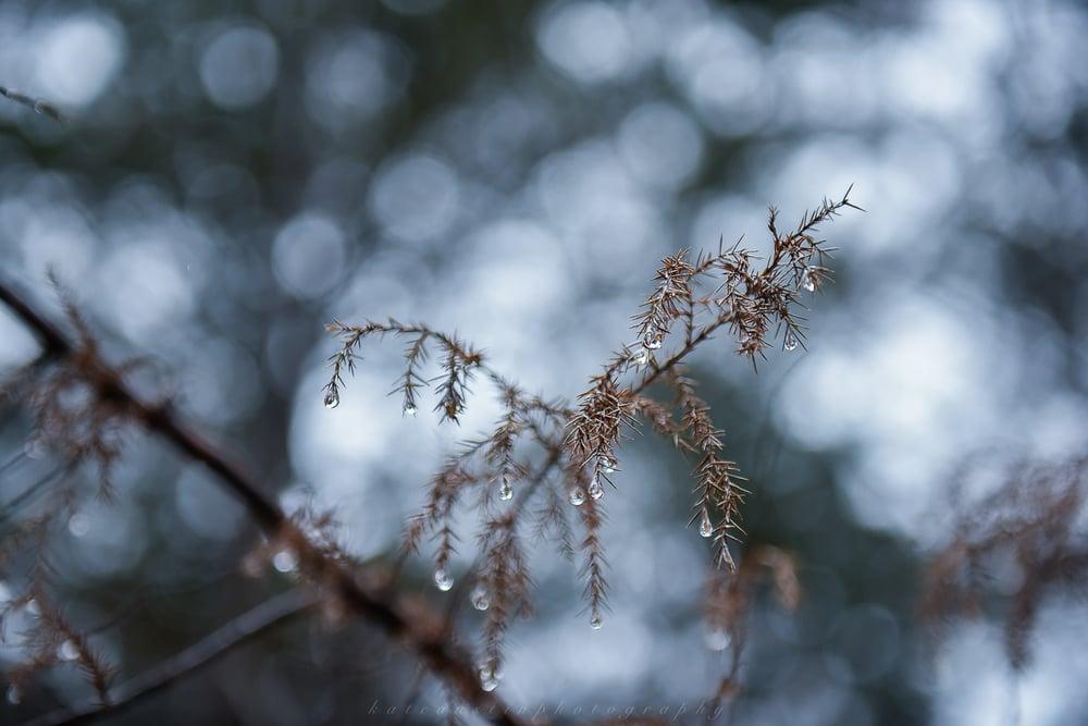FrozenToesTrailRaceJanuary 09, 2016.jpg