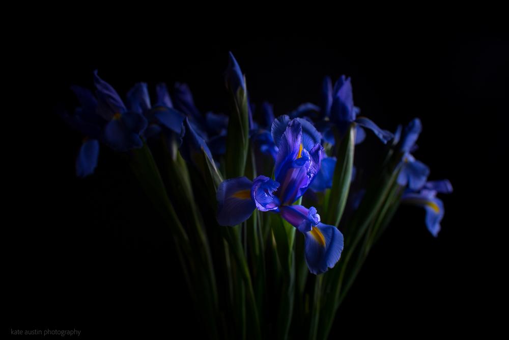 Iris20160218-3.jpg