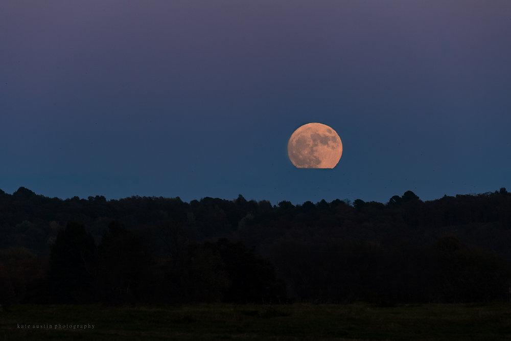 super_moon201620161113--2.jpg
