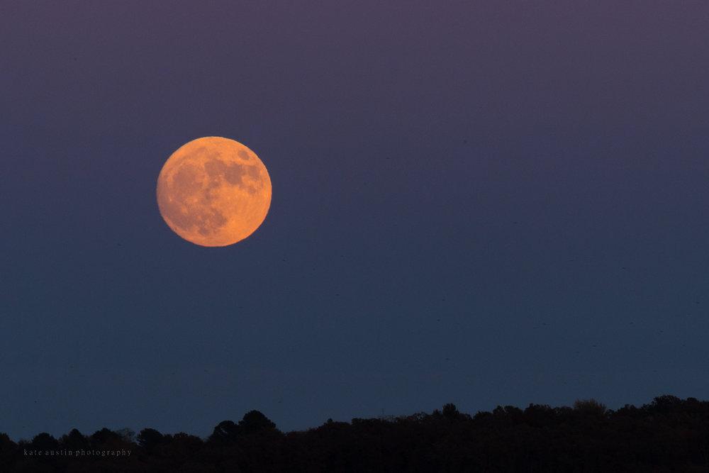 super_moon201620161113--6.jpg