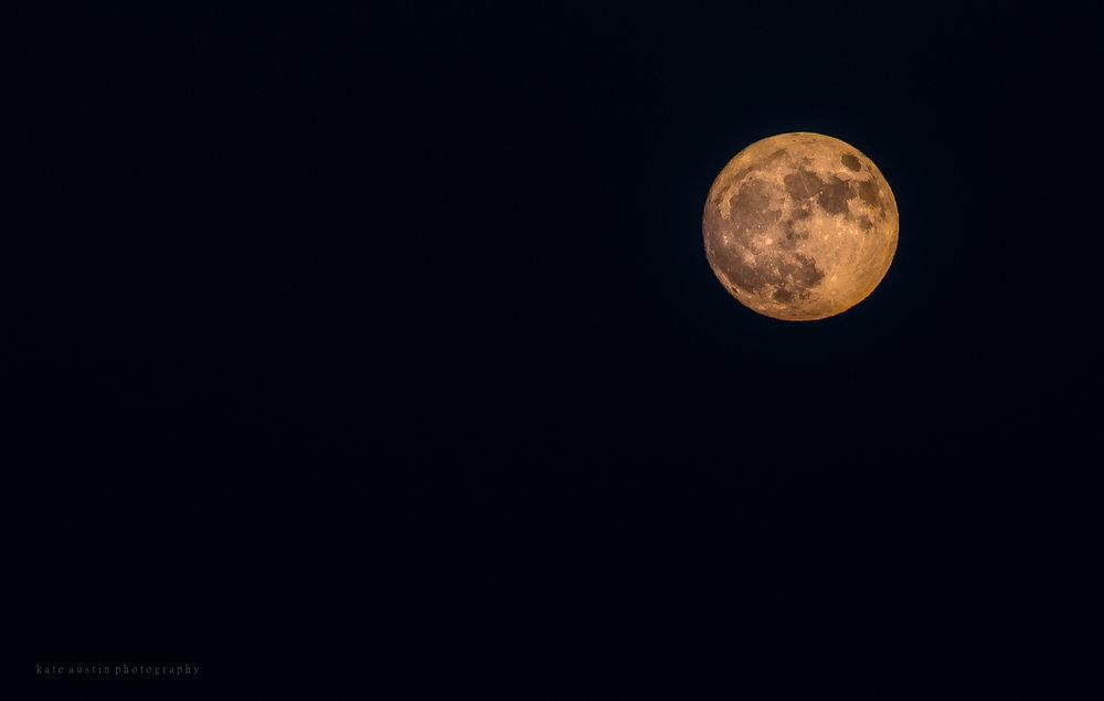 super_moon201620161113--8.jpg