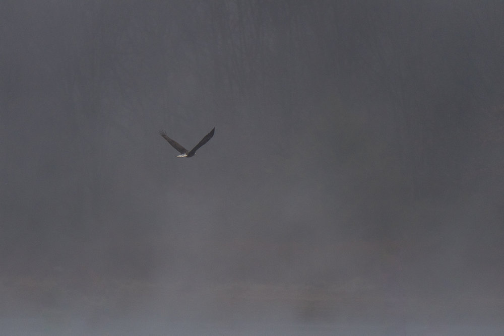 eagle_watch_converter20170115--5.jpg