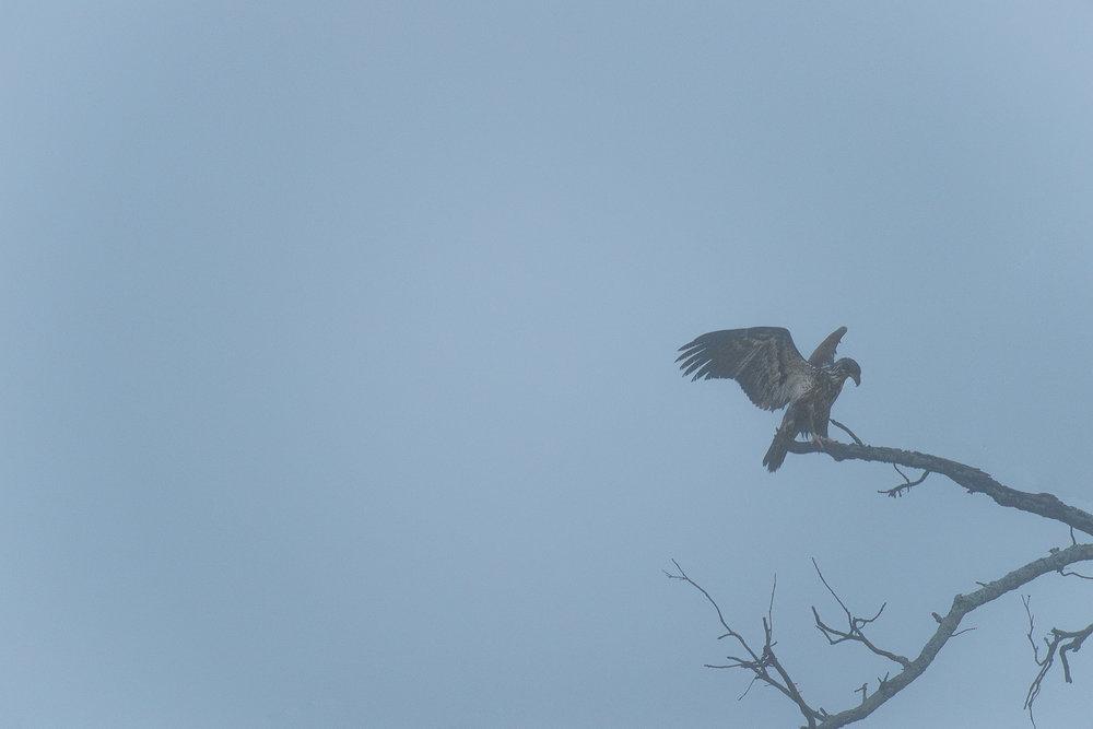 eagle_watch_converter20170115--8.jpg
