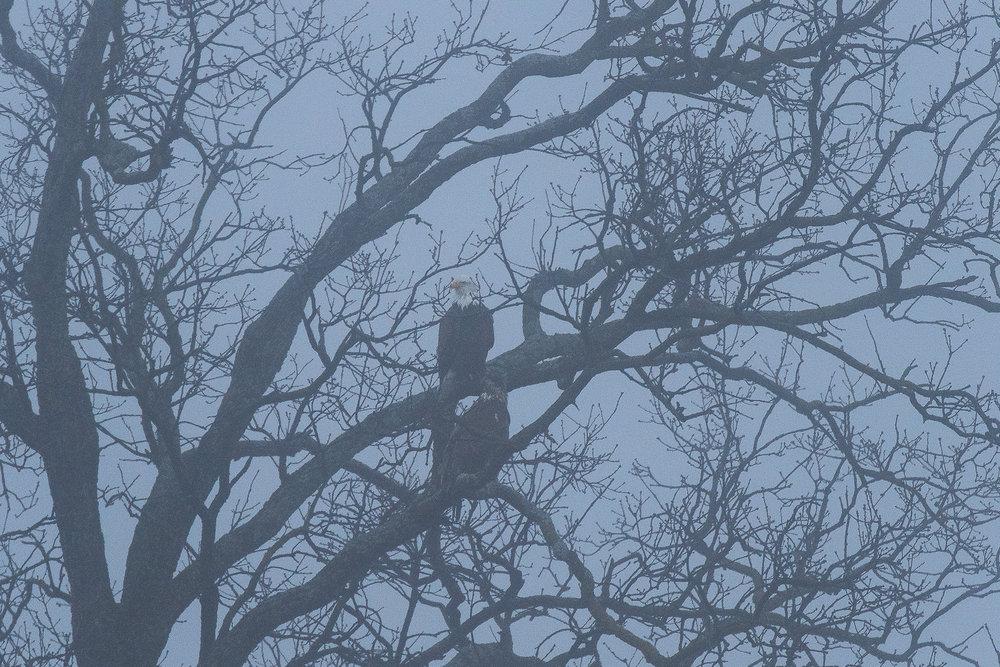 eagle_watch_converter20170115--12.jpg