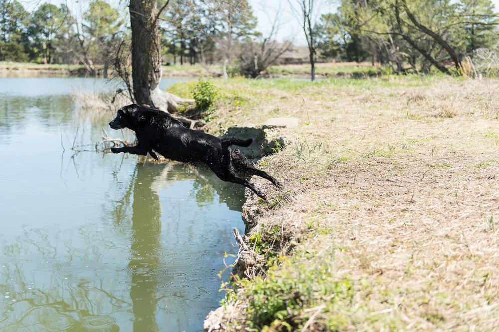 golfcourse_pond20170407--3.jpg