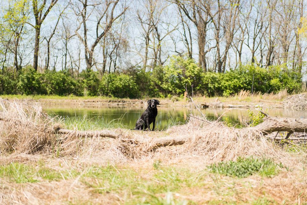 golfcourse_pond20170407--14.jpg