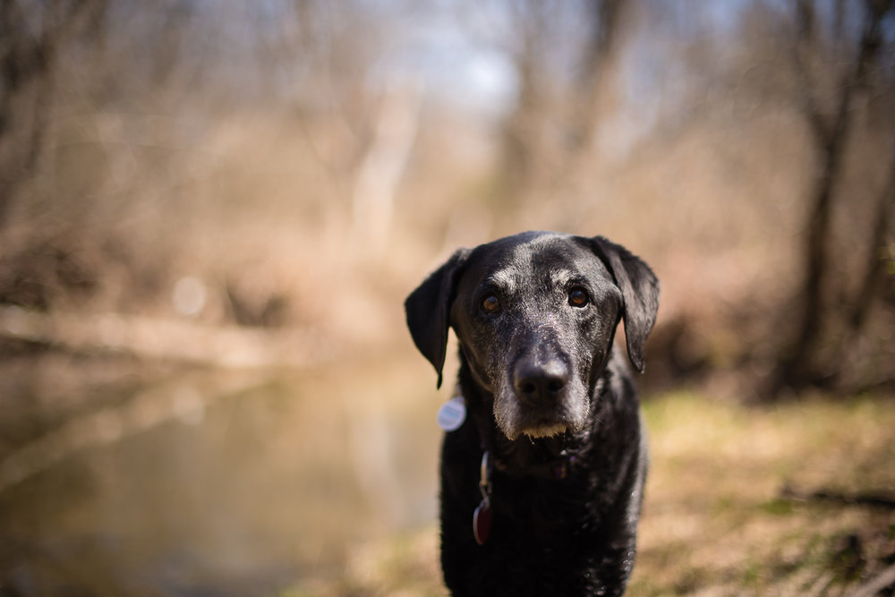 """""""But Momma! I have fields to run and creeks to swim. I don't have time for a portrait!"""""""