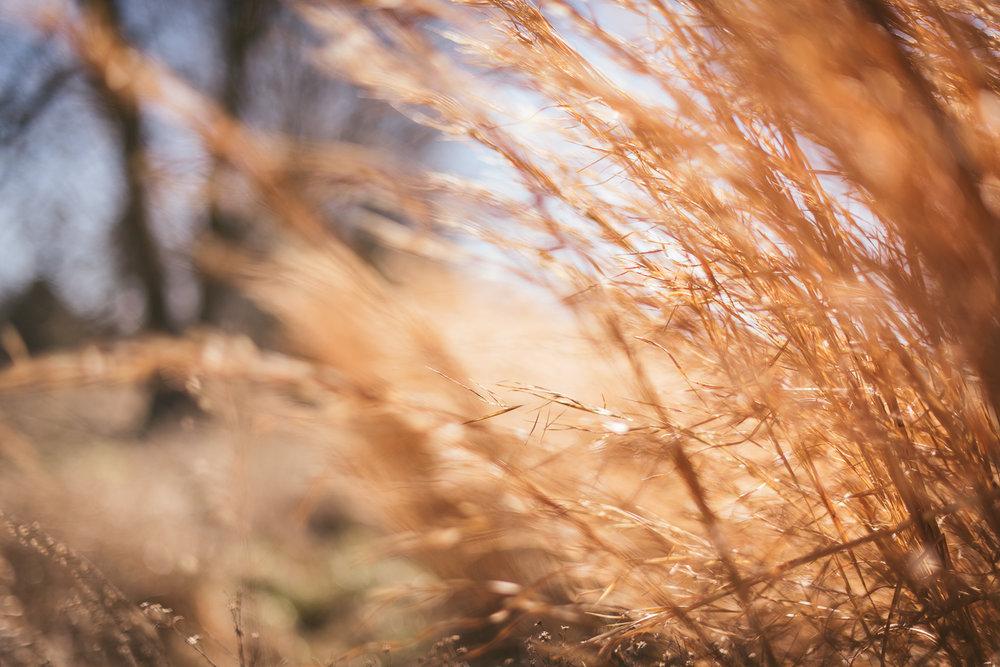 KMA_2466whole_wheat.jpg