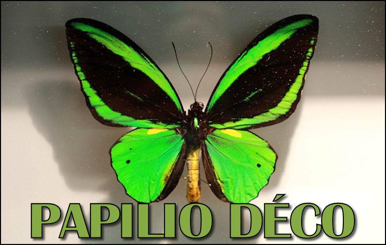 Papilio Déco