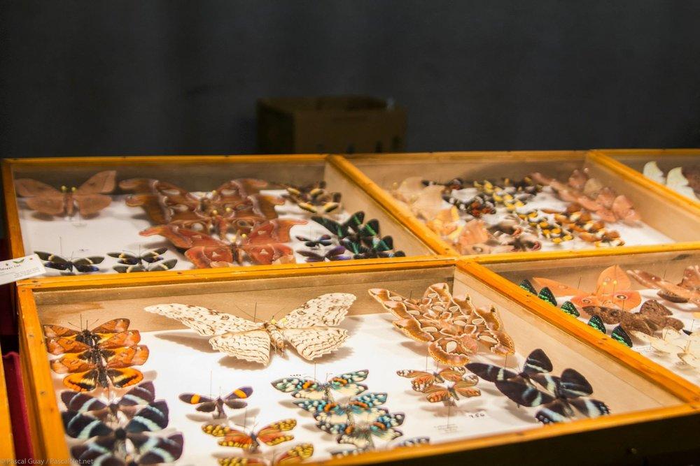 Insectes épinglés: Richard Denis et Laurent Lecerf
