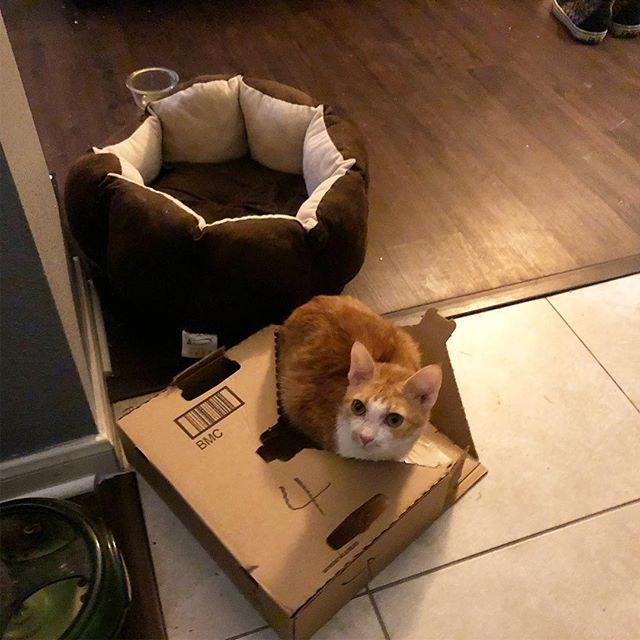 If I fits I sits... #catsofinstagram #cats #eevee #hasacatbedbutprefersthebox #cardboardbox #catlogic #ififitsisits #cat #atx #austin