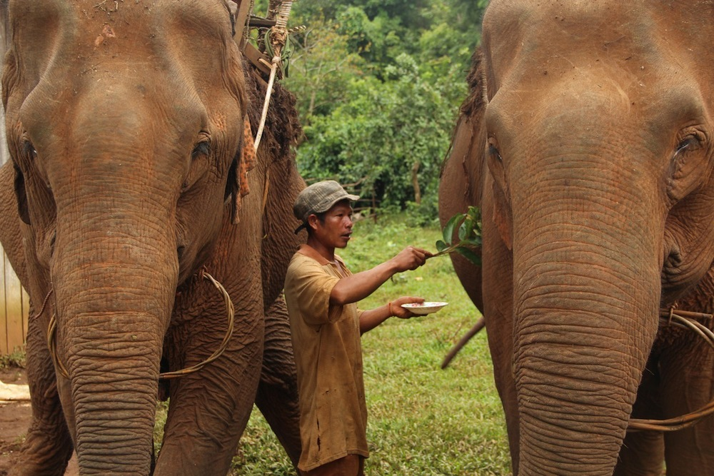 Il mahout Pouto allontana gli spiriti malvagi
