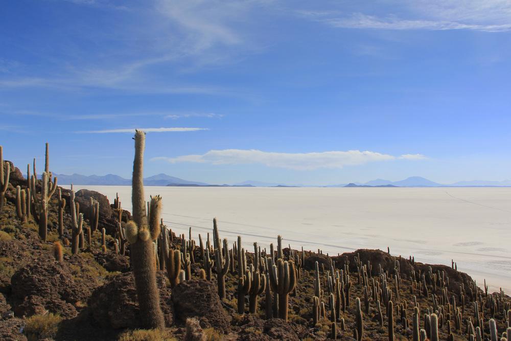 Salar de Uyuni, Isla del pescado