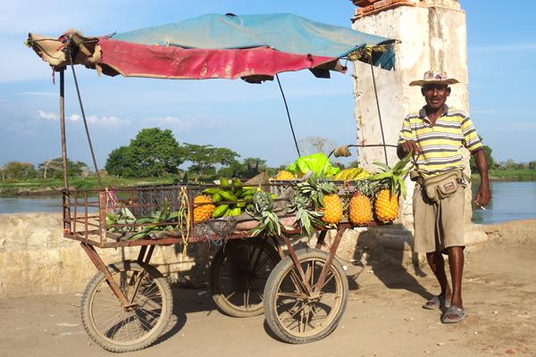 Mompox. venditore di Ananas