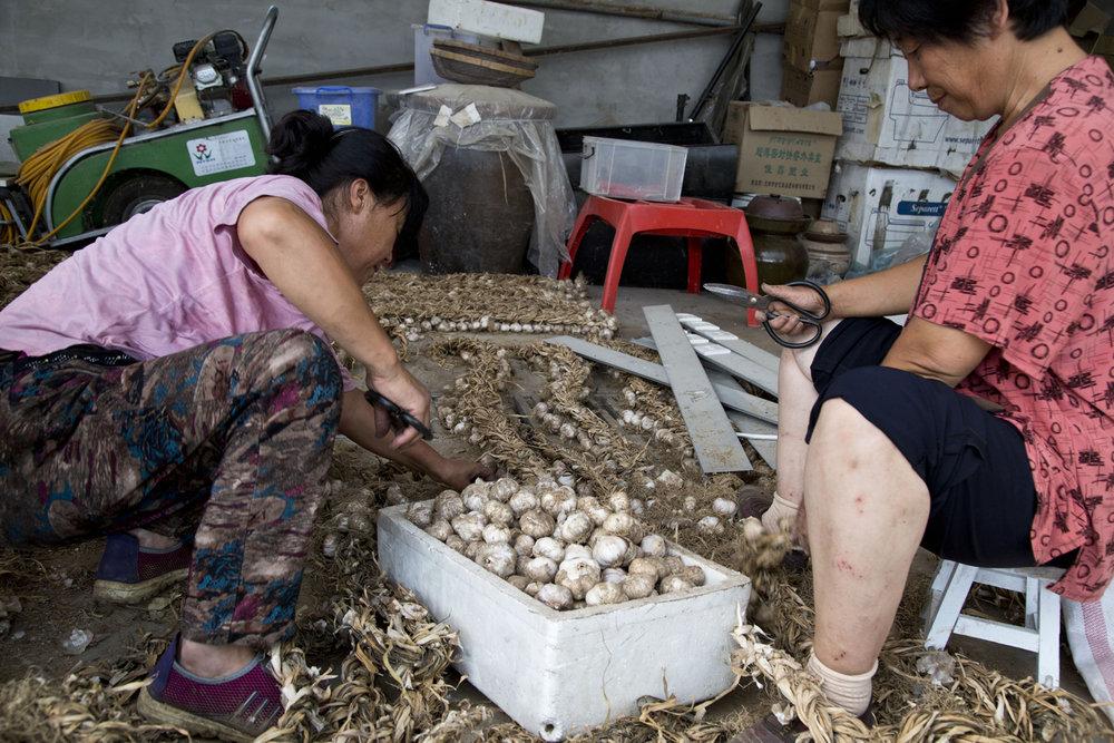 Contadini nell'azienda agricola di Shi Yan