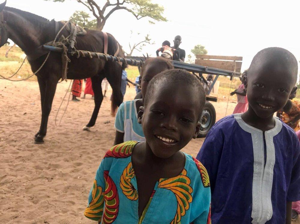 Il cavallo con alcuni studenti
