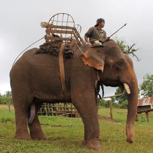 cambogiaelefantitop.JPG