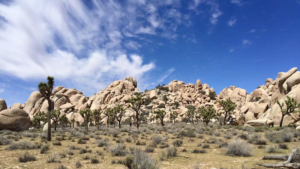 Beautiful views of Joshua Tree
