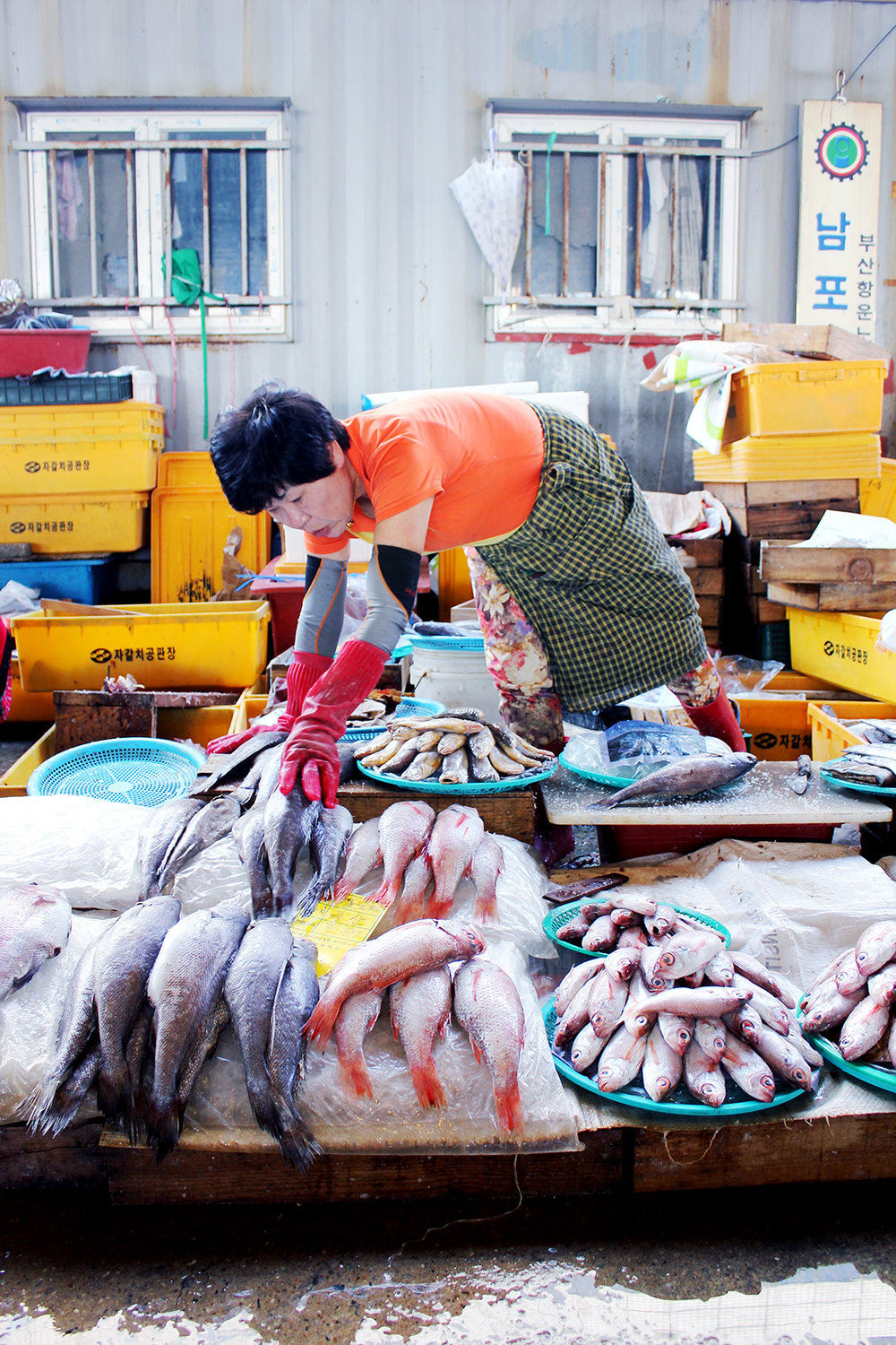 "Here a ""Jagalchi Ajumma"" lays out her fish at the market"