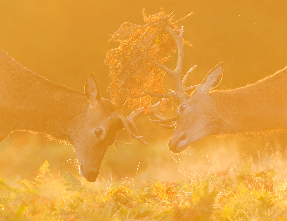 Richmond Park 15-09-12_0102.jpg