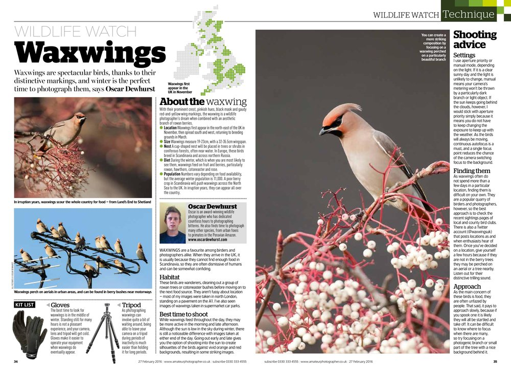 Waxwings Wildlife Watch