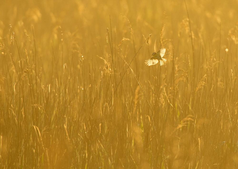 OscarDewhurst_Suffolk_2014_3961.jpg